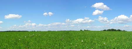Summer panoramic landscape