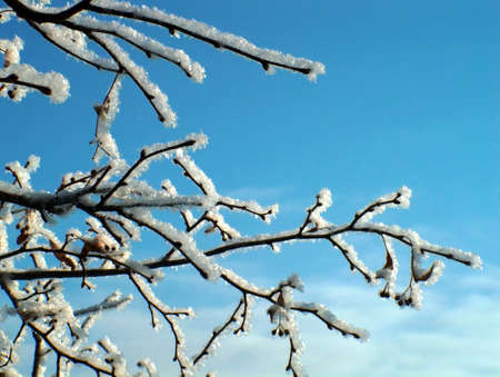 Winter background Stock Photo - 605393