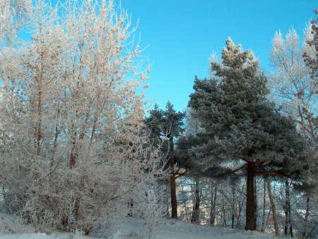 Winter trees Stock Photo - 605390