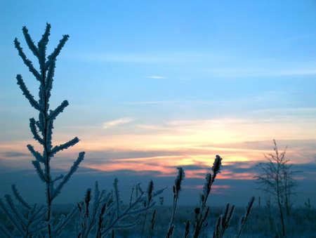 Winter sunset Stock Photo - 605385