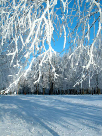 Winter picture with trees Stock Photo - 644563