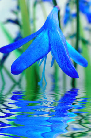 Blue flower reflection in water.