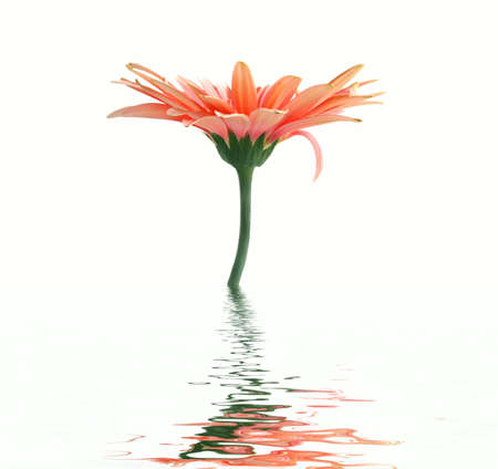 Pink flower reflection in water photo