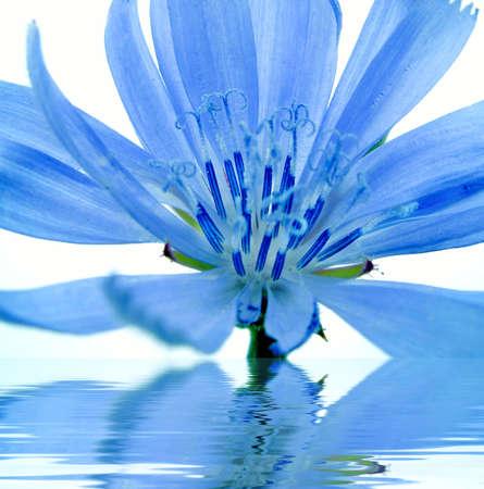 Blue flower reflected in water
