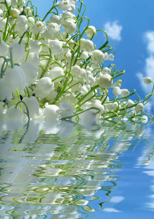 Spring Lily of the valley in water photo