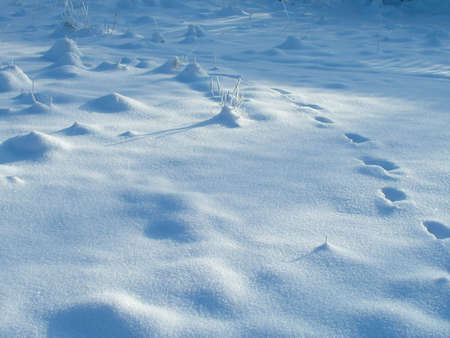 Snow texture photo