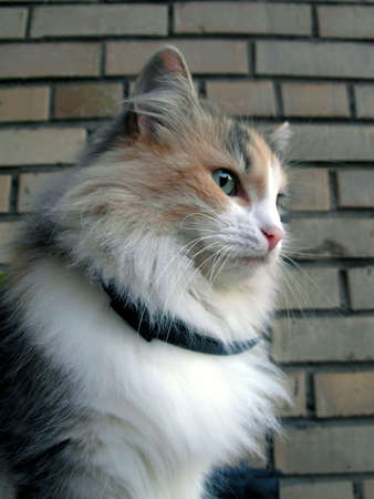 Portrait of a cat sitting on a balcony at a brick wall photo