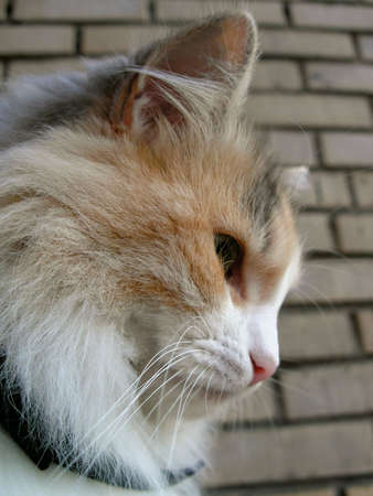 Portrait of a cat sitting photo