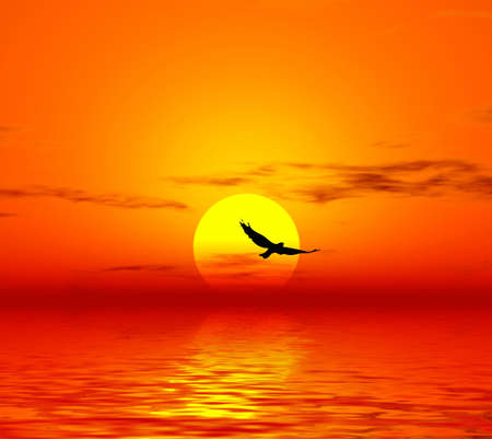 Sunset and lonely bird photo