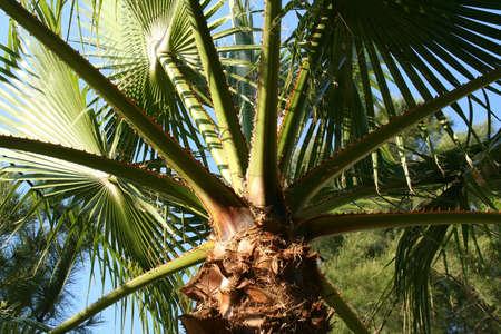 aegean: Palm