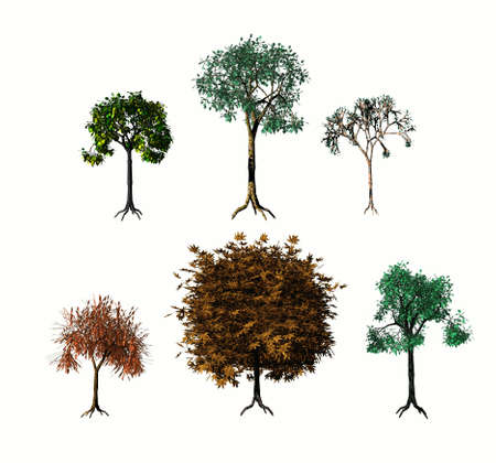 Various 3D trees on white background photo