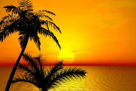 Sunset. Palms Stock Photo - 1268244