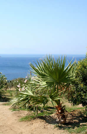 aegean sea: Aegean Sea and palms