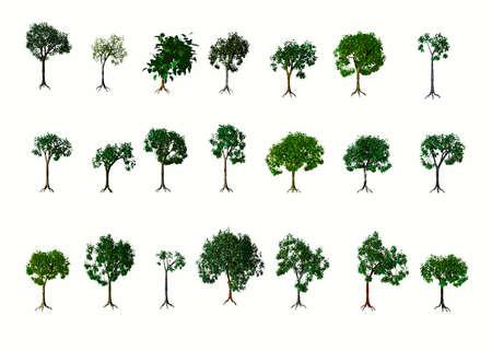 3D Trees. Summer