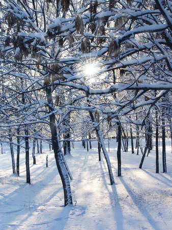 Winter nature Stock Photo - 2073401