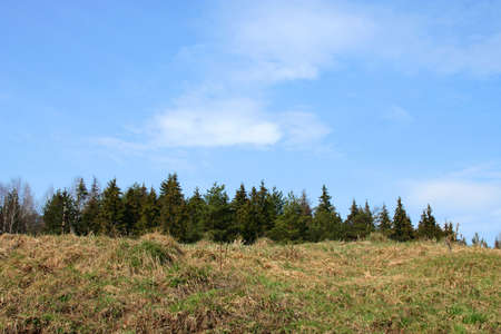 firry: Summer firry forest Stock Photo