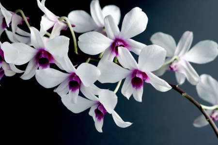 florescence: Flower close-up.  Orchid Stock Photo