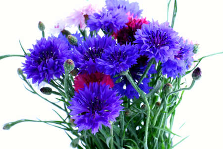 Flowers cornflowers  close-up Stock Photo - 3392803