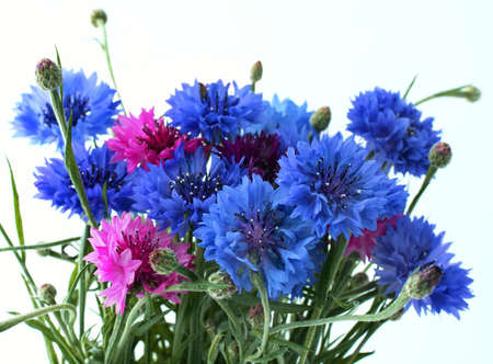 Flowers cornflowers  close-up Stock Photo - 3392800