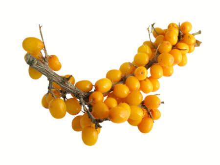 seabuckthorn: Sea-buckthorn berries on white background ( Hippophae rhamnoides)  Stock Photo