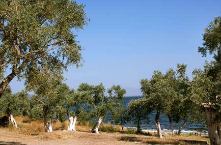 paisaje mediterraneo: Mediterr�neo del Paisaje con olivos