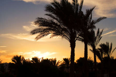 ale:  Sunset in Egypt . Charm an ale the Sheikh