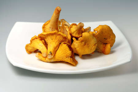 cantharellus cibarius:  Variety of edible mushroom chanterelle ( Cantharellus cibarius) on white background