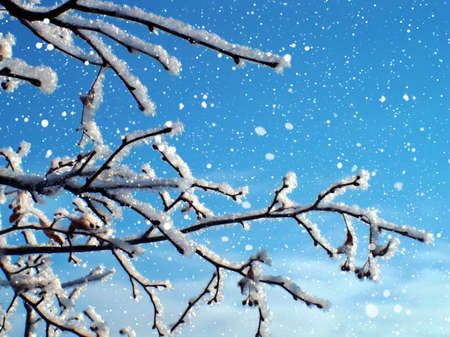 Frosty tree in snow and blue sky photo