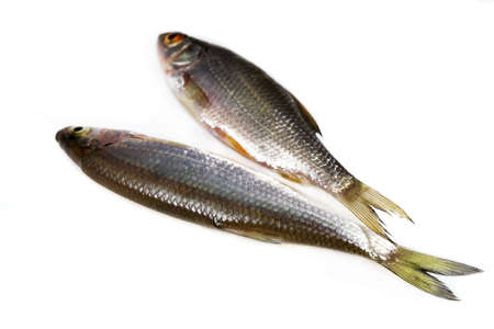 river fish: River fish in raw view