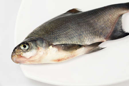 river fish: River fish in raw view. Bream