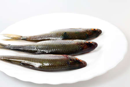 river fish: River fish in raw view on a plate