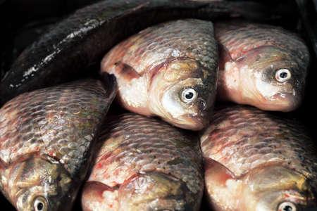 river fish: River fish in raw view. Crucian ( european carp)