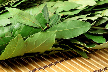 Aromatic Bay leaves  ( laurel ) photo