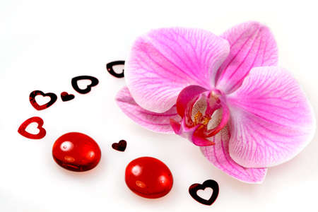 Flower pink orchid Stock Photo - 6278656