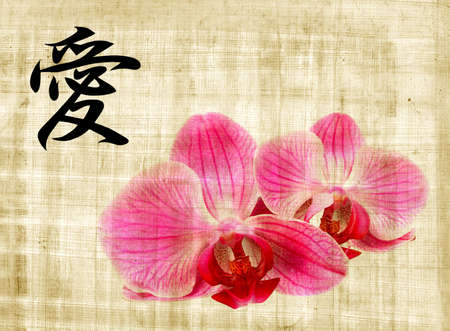 Beautiful pink orchid and hieroglyph love on old papyrus Stock Photo - 6312758