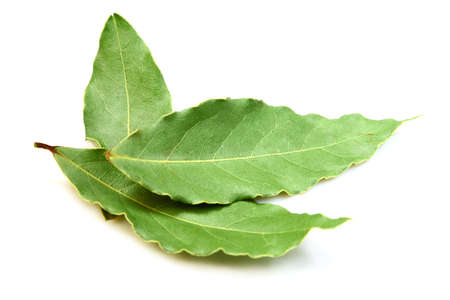 Aromatic Bay leaves ( laurel )  isolated over white background photo