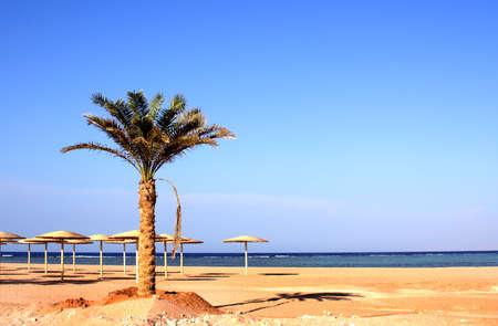 ale: Sea in egypt  ( Charm  ale  Sheikh ), Nabk bay