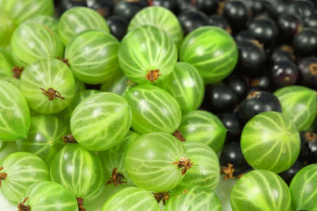 Sweet   black-currant and gooseberries for dessert and vegetarian diet Stock Photo - 7052732