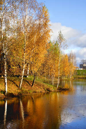 Beautiful landscape in park during the autumn period photo