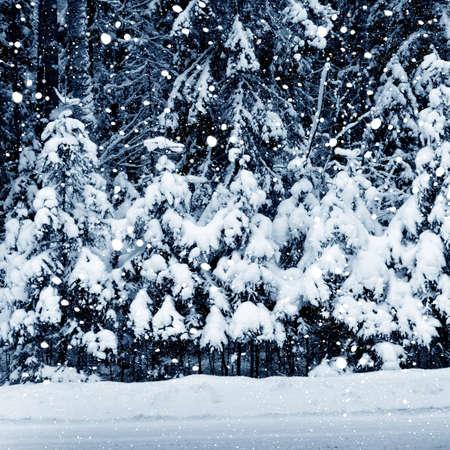 hoarfrost: Winter landscape . Forest in hoarfrost Stock Photo