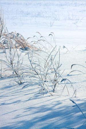 snowdrift: Winter landscape .  snowdrift