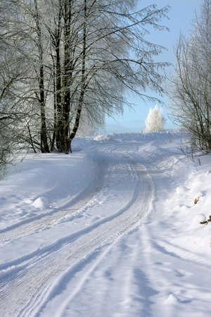Winter landscape . Way in  hoarfrosty Forest  photo