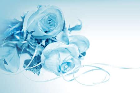 White rose auf blauem Hintergrund