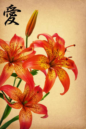 Flowers lily on old paper and hieroglyph  love Stock Photo - 8756083