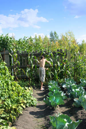 resident:  Summer resident in garden