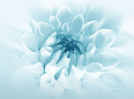 macros: Soft blue flower, background for invitation card, wallpaper