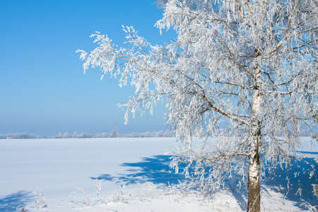 Beautiful nature, winter scenery - frosty trees in forest Stock Photo - 11049084