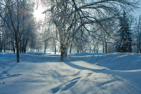 Beautiful nature, winter scenery - frosty trees in forest Stock Photo - 11049126