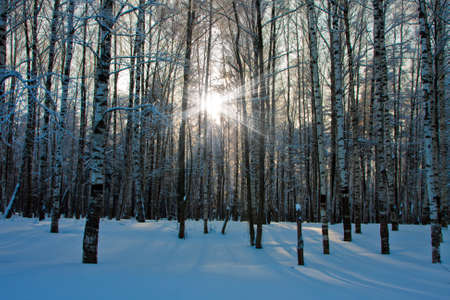 Beautiful nature, winter scenery - frosty trees in forest  photo