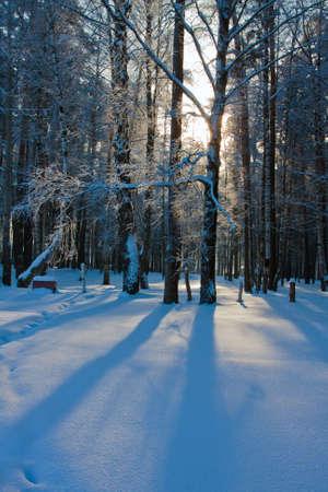 snowy field: Beautiful nature, winter scenery - frosty trees in forest